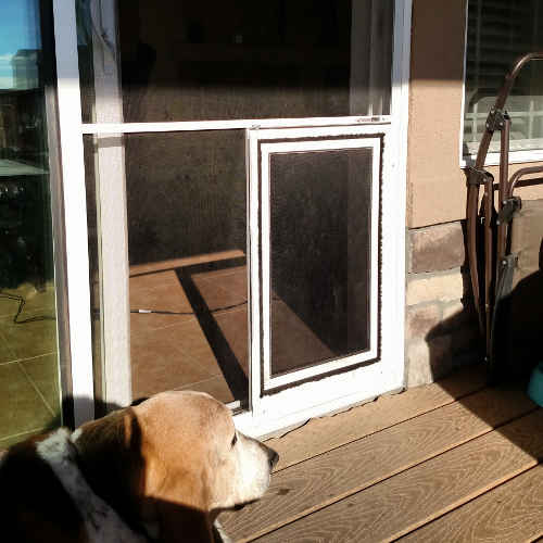 Glass door sliding glass doors with doggie door built in for Entry door with built in screen